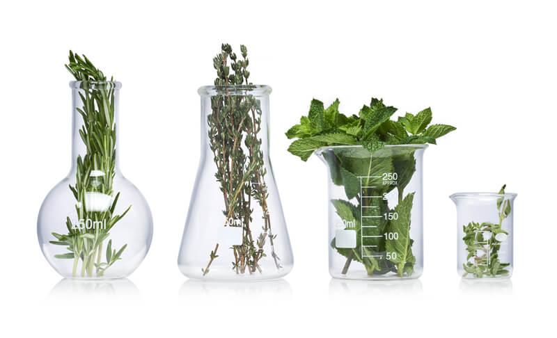 Herbs in glass science jars