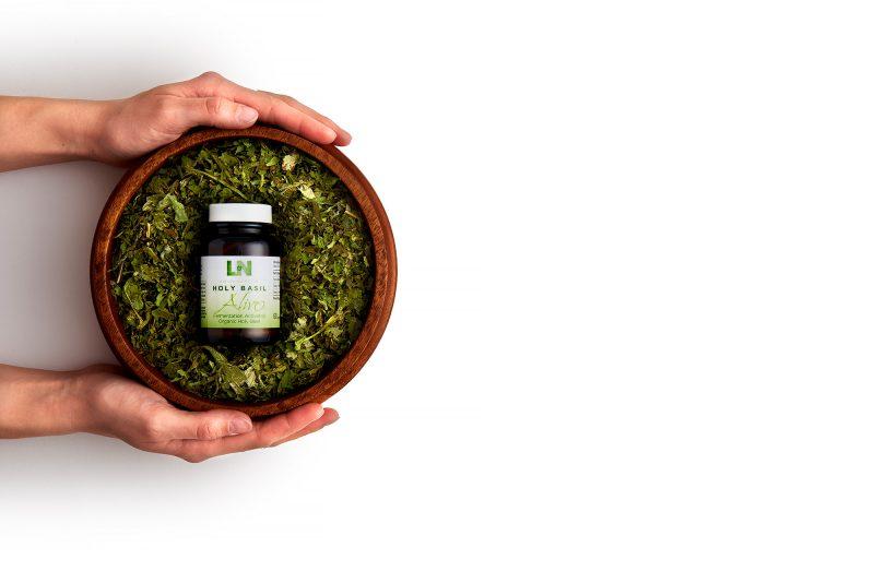 holy basil herb